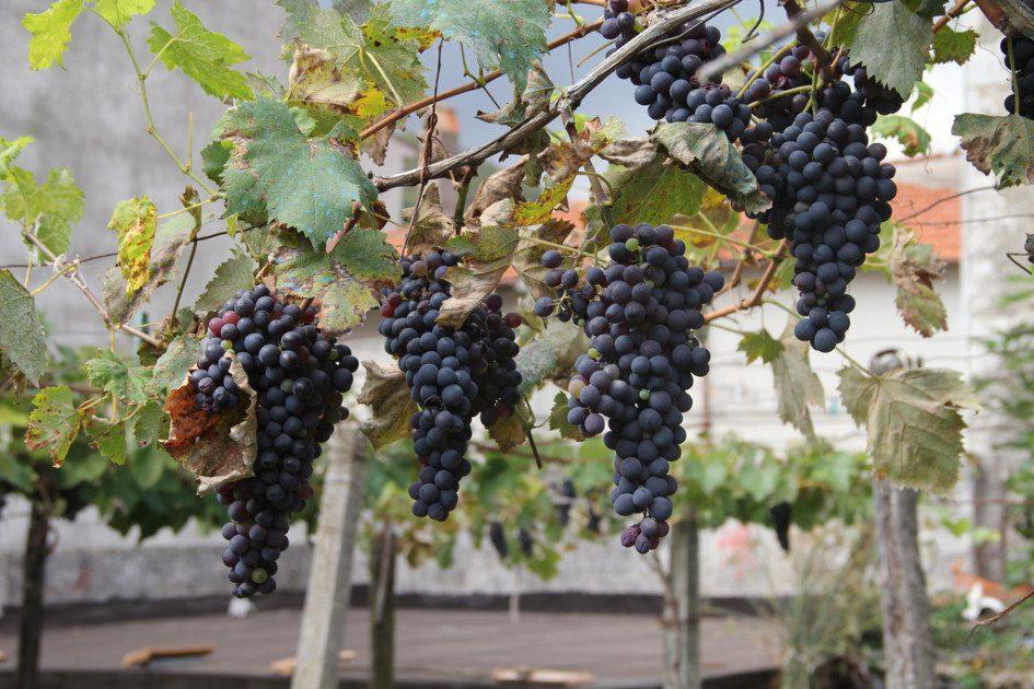 wine tourism getaways in the Rioja