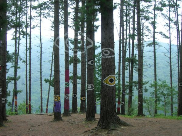 oma forest eye